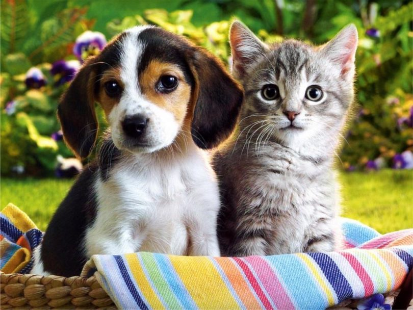 Inexpensive Affordable Puppy Kitten Vaccination